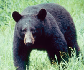 Sportsmen in New Jersey challenge black bear hunting ban