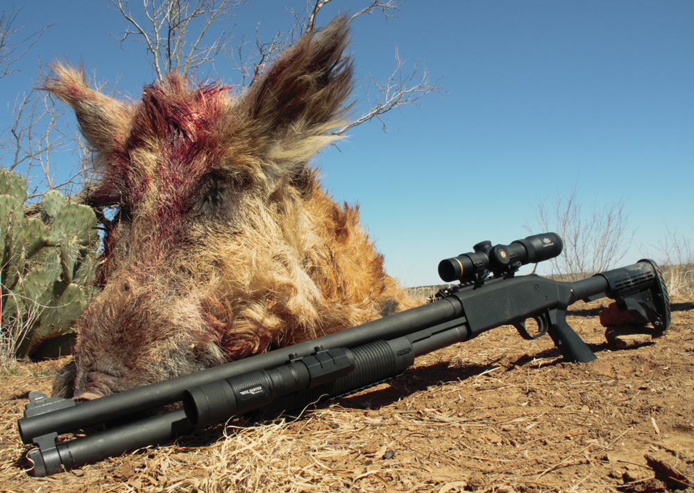 Mossberg 500 Tactical for hog hunting.