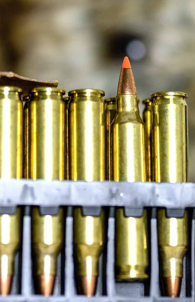The Hornady V-Max bullet is an ideal coyote choice because the bullet is frangible, and in the pint-sized .204 Ruger it does minimum damage to pelts.